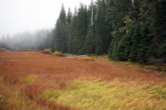 Foggy Autumn Meadow off scenic hwy 242