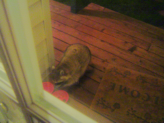 Thief on the porch