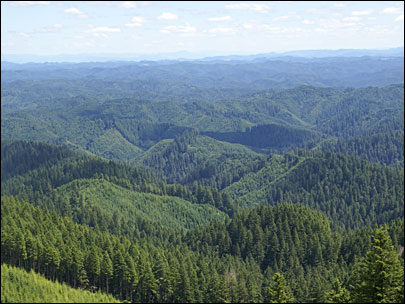 OPINION: How to make NW forests sing &#39;ka-ching&#39; again