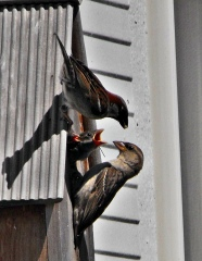 FEEDING THE YOUNGSTERS