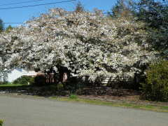 Picture of Spring in the Coquille Valley