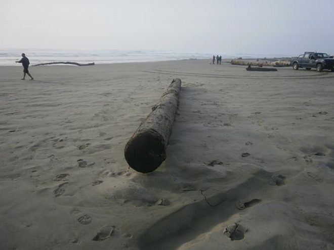 Police: Eugene man crushed by rolling log at Florence beach
