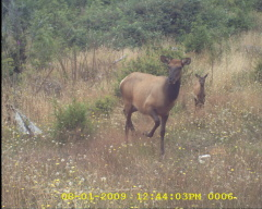 mommy & baby caught on my trail camera