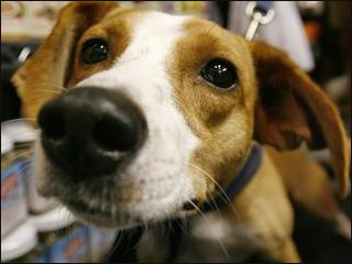 Doggone: Pooches banned from Oregon Capitol