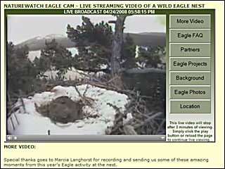 Live camera on eagle's nest in Oregon
