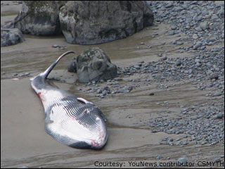 Struggling whale likely same one found dead