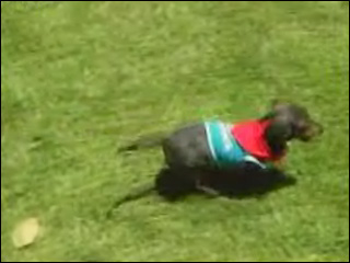Man pleads &#39;not guilty&#39; in wiener dog race head-butting
