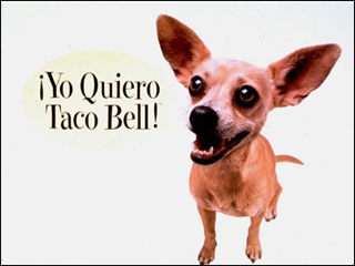 Taco Bell ad star Gidget the Chihuahua dies at 15