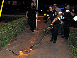 Python captured in north Eugene