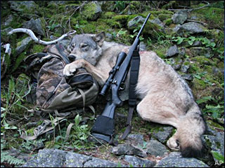 Hunters bag 3 wolves in first days of public hunt