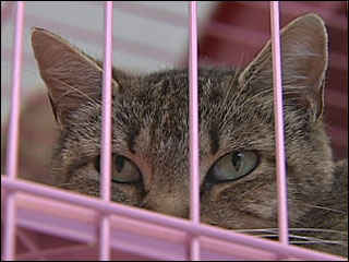 Trap, neuter, release: 'We will reduce the number of cats out there'