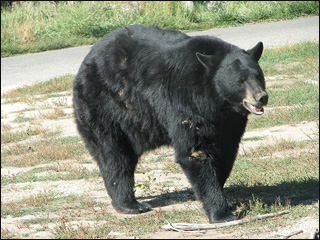 Idaho boy kills bear that wouldn't leave porch