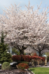 a spring tree in bloom