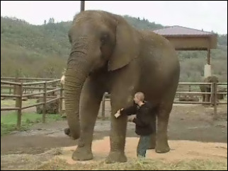Boy with autism bonds with elephants at Oregon's Wildlife Safari