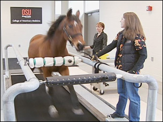 OSU buys $170K treadmill for horses