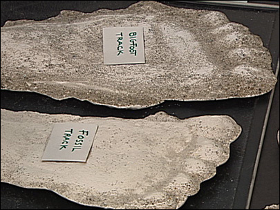 Bigfoot hunter says fossil proves creature's existence
