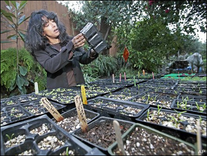 Urban farmers fight nationwide to sow green biz