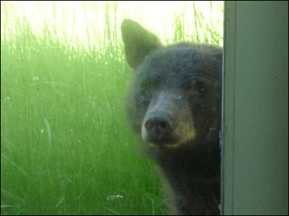 Photos of the south Eugene bear