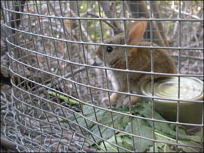 Pot growers fed marijuana to pet rabbit