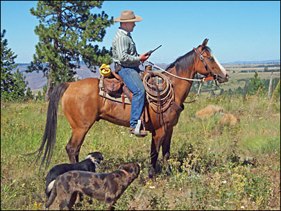 Oregon cowboy rides range to help track wolves