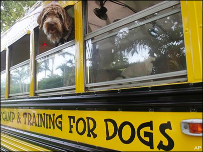 Photos: Dogs go to day camp