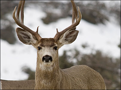 Deer attack sends Oregon bird watcher to hospital