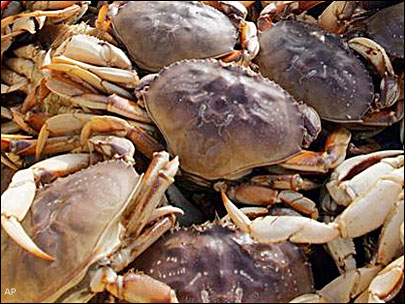 Oregon's famous Dungeness crab season delayed