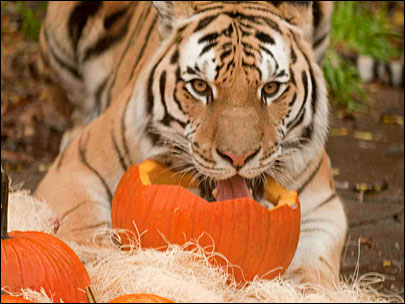 Photo Gallery: Zoo animals and pumpkins