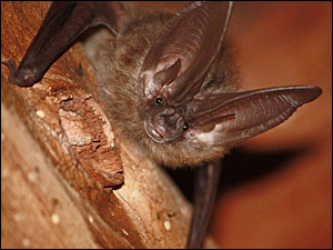 'One of the most important things that kids can do is to learn about bats'