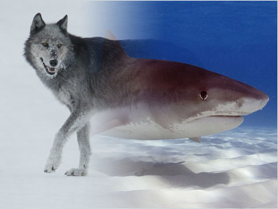 Sharks, wolves and the 'ecology of fear'