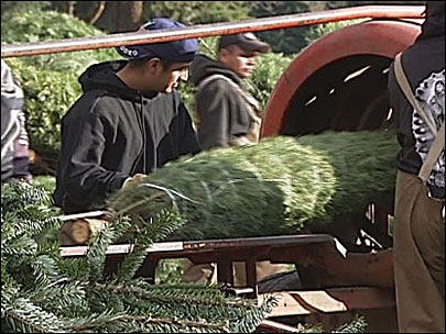 Home for the holidays? That's good news for Christmas tree farms