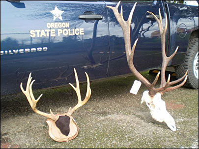 Poaching trophy animals carries a hefty new fine in Oregon