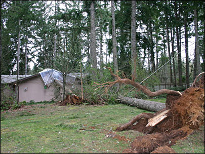 Windstorm pummels Cottage Grove