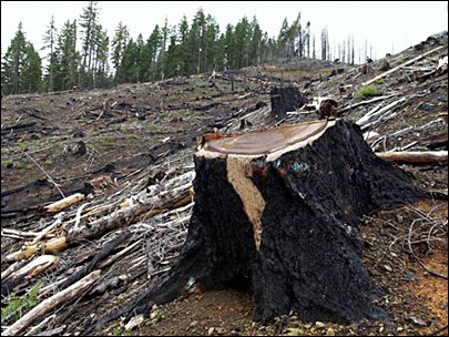 Judge: Obama illegally halted WOPR logging plan