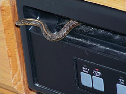 Snake in dishwasher: 'What the heck do we do now?'