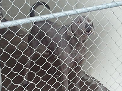 Citizens rally around dog on death row