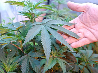 Pot backers get approval for Calif. ballot petitions 