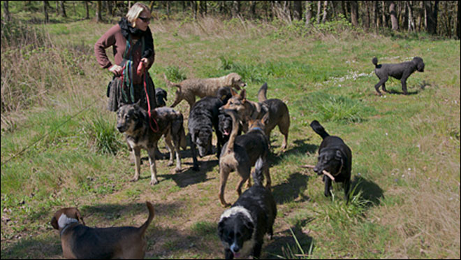 Jobs: A decade as a pro dog walker