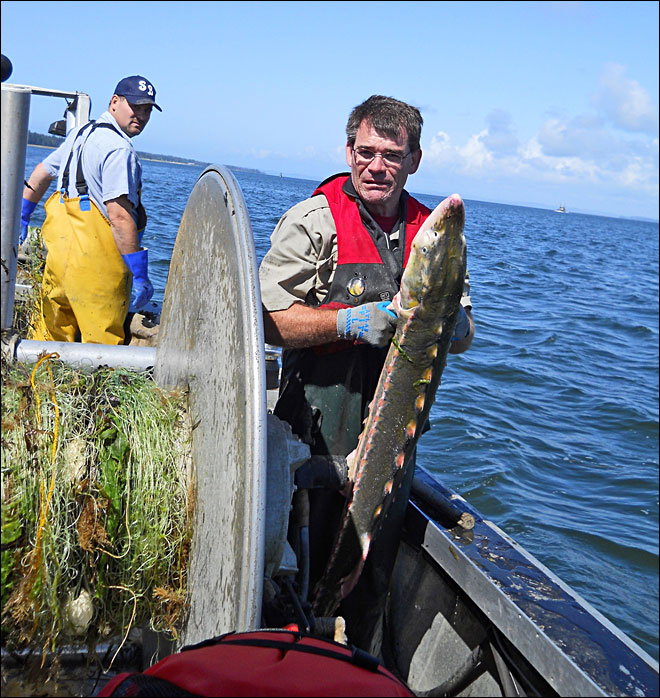 Scientists study the green sturgeon
