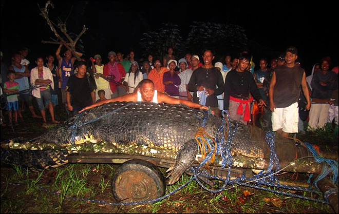 Philippine crocodile declared largest in captivity