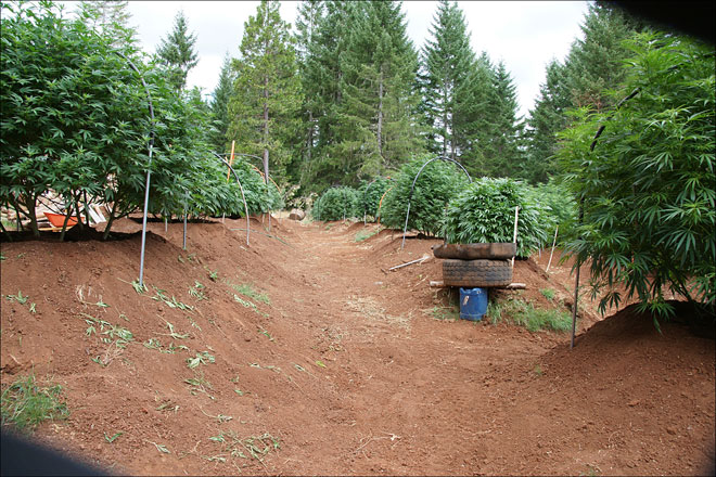 Sheriff finds 400 pot plants on rural compound