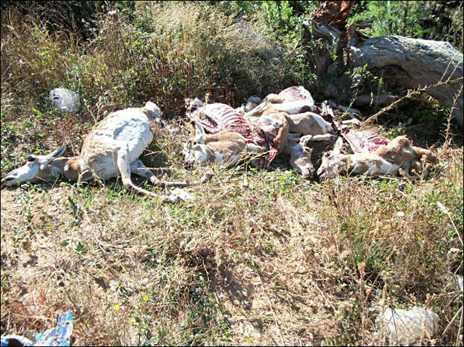 Antelope carcasses found dumped