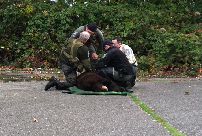 Bear captured behind Washington elementary school