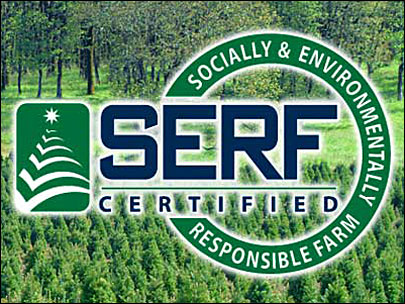 Program promotes sustainable Christmas tree farms