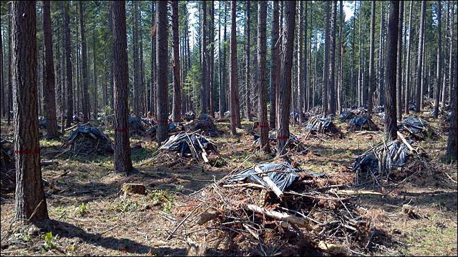 Study: Thinning to prevent forest fires releases even more carbon