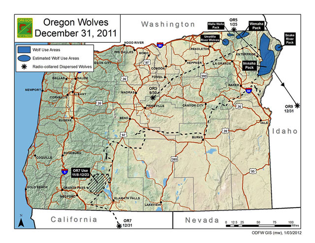 Oregon's wandering wolves