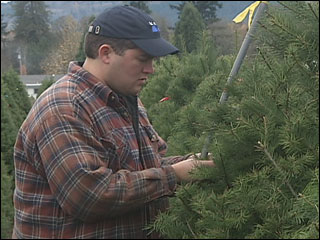 Seth on the Job - Christmas tree farm