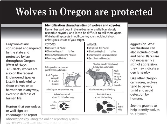 Wandering wolf subject of protection campaigns