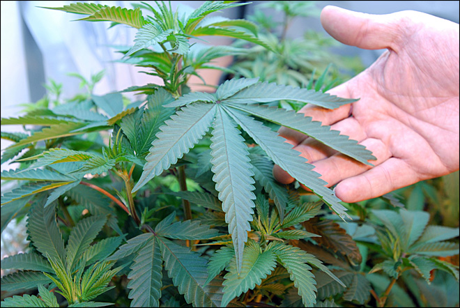 Out-of-staters get Oregon medical marijuana cards