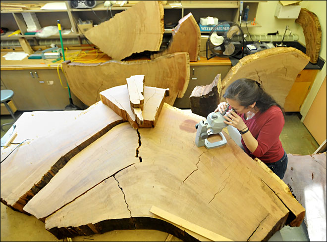 Tree rings offer clues about climate change